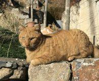 Name: Jasper Rasse: Europäisch Kurzhaar Alter: geb. ca. 2015 Ort: Kreta/Griechenland […]